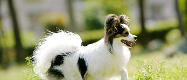 犬 関節炎 対策 グッズ